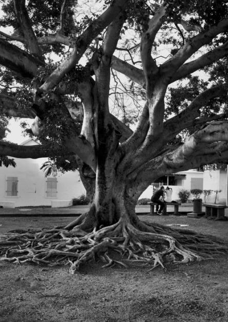 arbres_des_villes_2